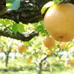 【春日部市史】戦後の春日部市域農業3(都市化の波と農業)